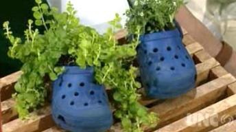 Innovative Planting Ideas image