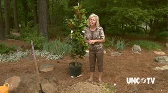 Arbor Day Tree Planting image
