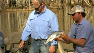 Roanoke River Experience