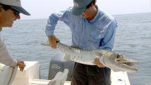 Barracuda Bite