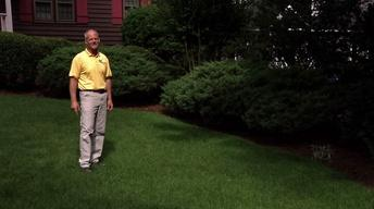 Sod and Lawn Care