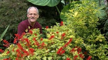 Plant of the Week - Dancing Flames Salvia Salvia
