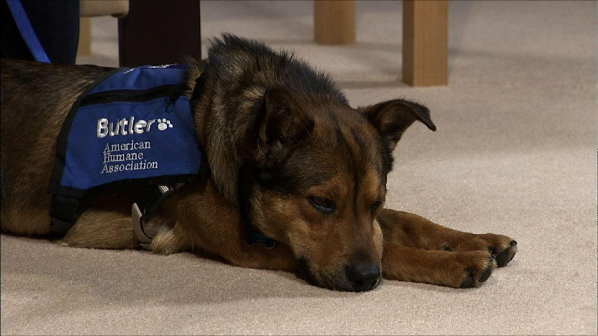 Amy McCullough & Butler, National Weather Therapy Dog image