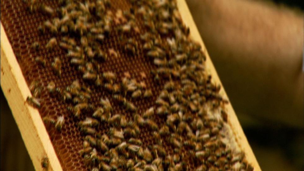 Honey Bee Adoption Service image