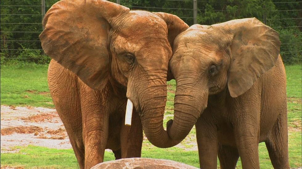 NC Zoo Summer Camp image
