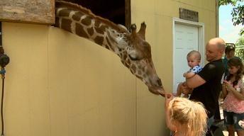 Aloha Safari Zoo image