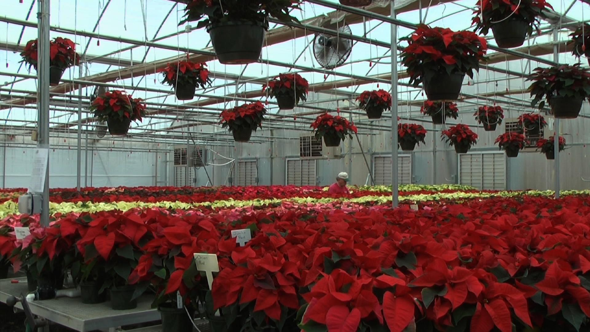 Mitchell's Nursery and Greenhouse image