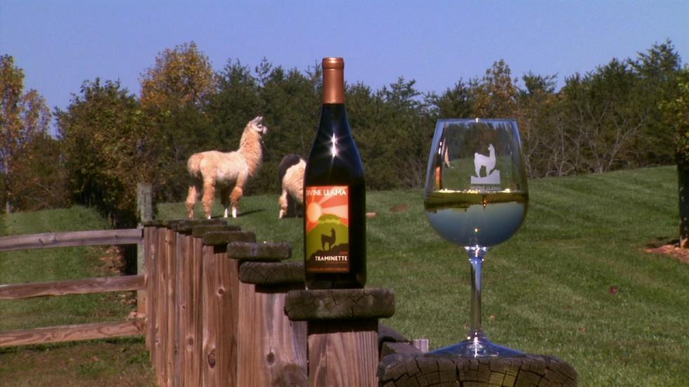 Divine Llama Vineyards image