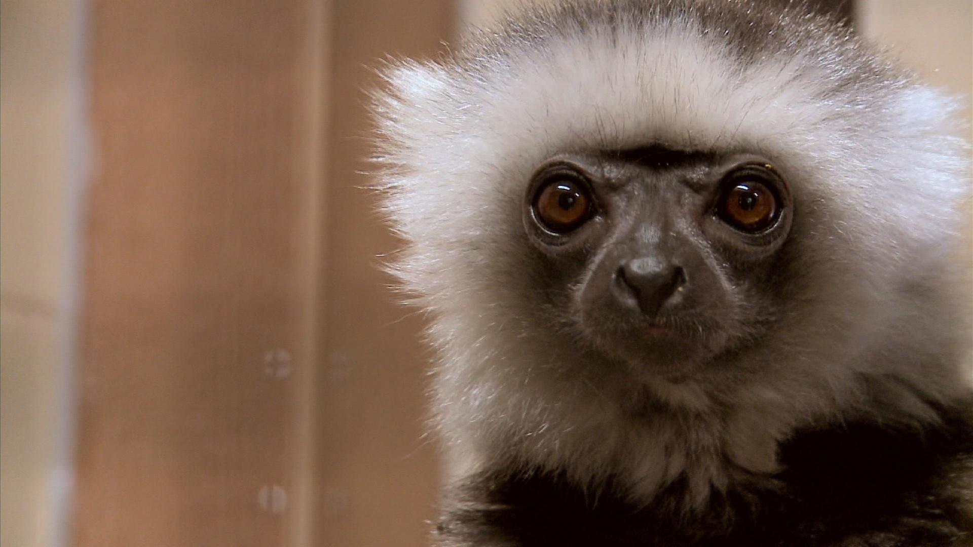 Duke Lemur Center image
