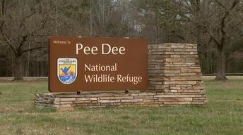 Pee Dee National Wildlife Refuge image