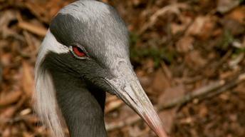 Sylvan Heights Waterfowl Park image