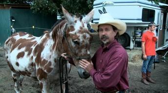 Benson's Mule Days