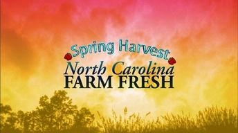 Spring Harvest NC Farm Fresh