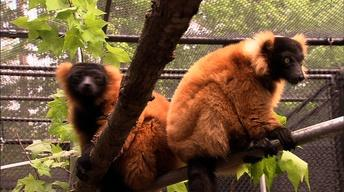 Sandburg's Connemara/Duke Lemur Center/Buffalo Creek Weavers