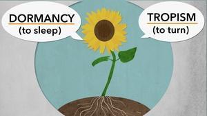 Tropism and Dormancy