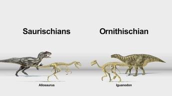 Dinosaurs: Hips