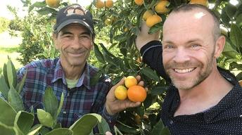 Placer County Mandarins