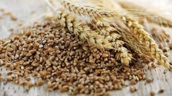 Healthy Families | Whole Grains