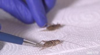 Cricket Farming, Musk Oxen & Appalachian Air Pollution