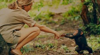 Documentary gives new look at Jane Goodall's early research