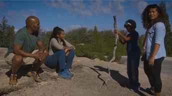 Childrens National Forest / Gerrelaine