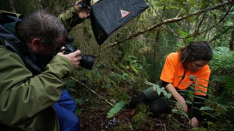 Rare -- Searching for the Rowi Kiwi
