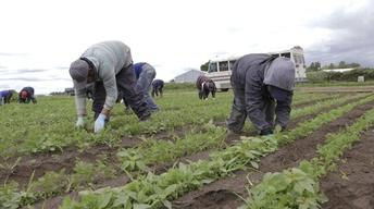 Washington Farmers Safeguard Migrant Workers