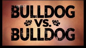 Bulldog vs. Bulldog