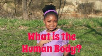 What is the Human Body
