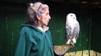 Rehabilitators care for Wildlife