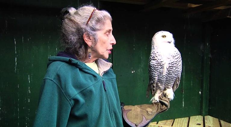 Adirondack Journeys: Rehabilitators care for Wildlife