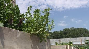 Backyard Farmer: Farmer Garden