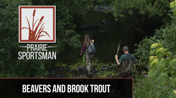 Beavers & Brook Trout