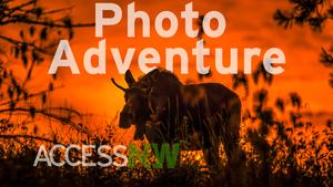 Photo Adventure