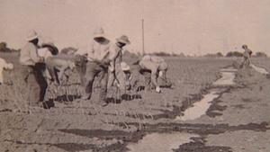 We Came to Grow: Japanese Americans in the Central Valley