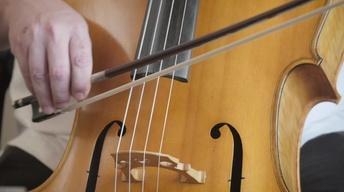 636: Cavanaugh Strings