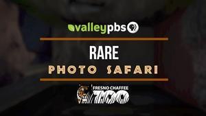 Rare Photo Safari
