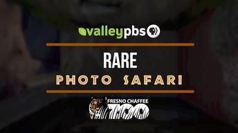 Rare Photo Safari