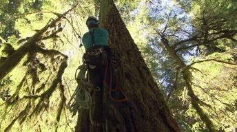 Oregon Field Guide's Search For Oregon's Tallest Tree