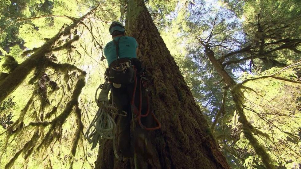 Oregon Field Guide's Search For Oregon's Tallest Tree image