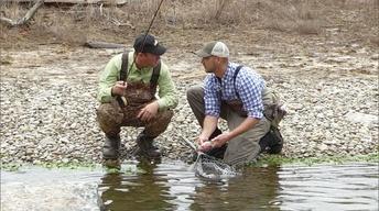 Rabbit Dogs; Trappers Help Western Kentucky; Hatchery Creek