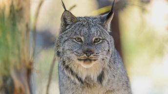 Idaho's Endangered Species