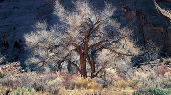Landscape photographer races to finish decades of work