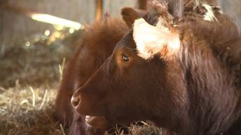 MLJ Community Forum: Dairy Farms in Crisis