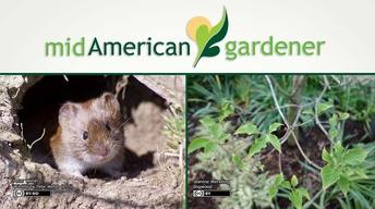 Mid-American Gardener with Dianne Noland May 25, 2017 Show#2