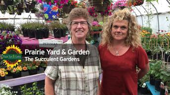 Creating Succulent Gardens