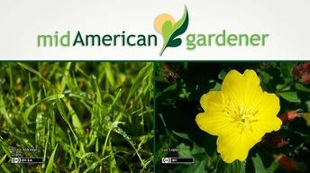 Mid-American Gardener with Dianne Noland May 11, 2017