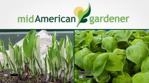 Mid-American Gardener with Sandy Mason March 1, 2018