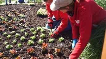 Nebraska Stories: Planting A Sunken Garden