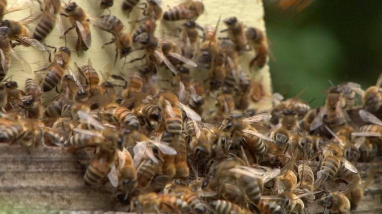 NJTV News: Local beekeepers push back against proposed regulations